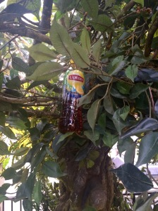 Lipton Ice Tea tree
